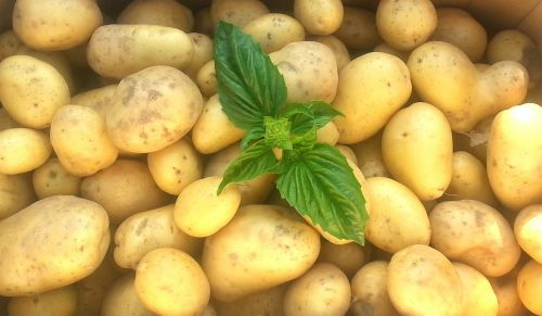 bulvės,frisch,žaliavinis