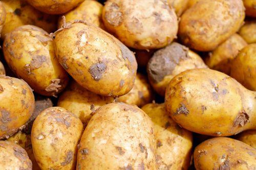 bulvės,daržovės,erdfrucht,maistas,angliavandeniai,žaliosios bulvės,naujos bulvės,žemės obuolys,nepažeista,derlius,Žemdirbystė