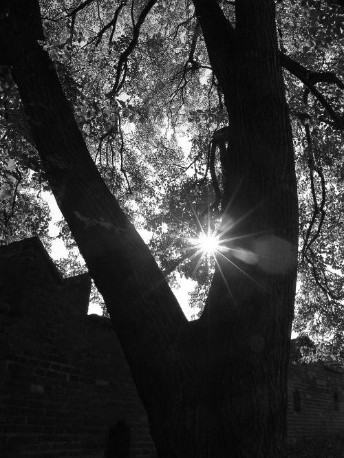 prague,kelionė,motyvas,medis,saulė,saulės šviesa,saulės spindulys