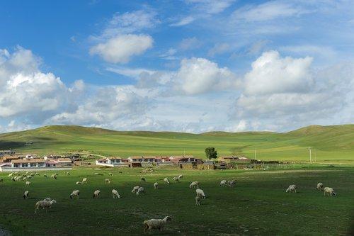 prerijų, mėlynas dangus ir balti debesys, Orų, spalva, Turizmas, Mongolija, peizažas, natūralus, gražus, vėjo energijos gamybos, šešėlis, avių, niekas, Žemdirbystė, kraštovaizdis, pastoracinė, gyvulininkystė, lauko