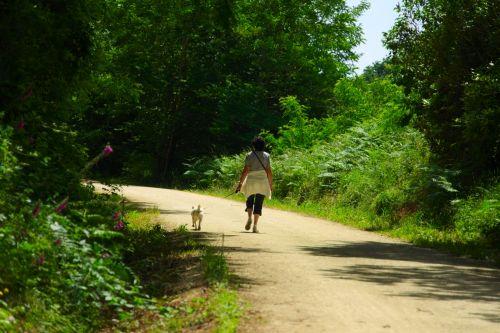 vaikščioti, moteris, asmuo, šuo, laisvalaikis, vaikščioti, sveikata, gamta, žaluma, saulė, šuo vaikščioti