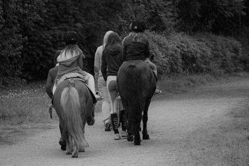 arklys, poniai, lentynas, laisvalaikis, miškai, gamta, jodinėjimas, Jodinėjimas, juoda & nbsp, balta, Jodinėjimas arkliu