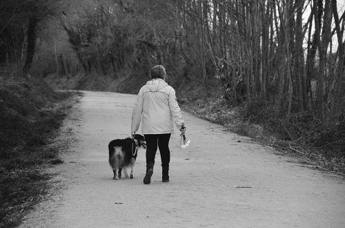 vaikščioti, vaikščioti, šuo, charakteris, Lady, juoda & nbsp, balta, švarus & nbsp, oras, vaikščioti savo šunį