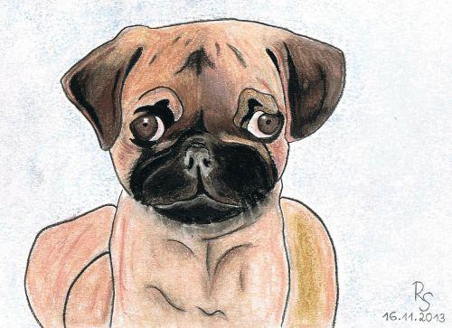 Mopsas,šuo,piešimas,pastelė,medžio anglių piešimas