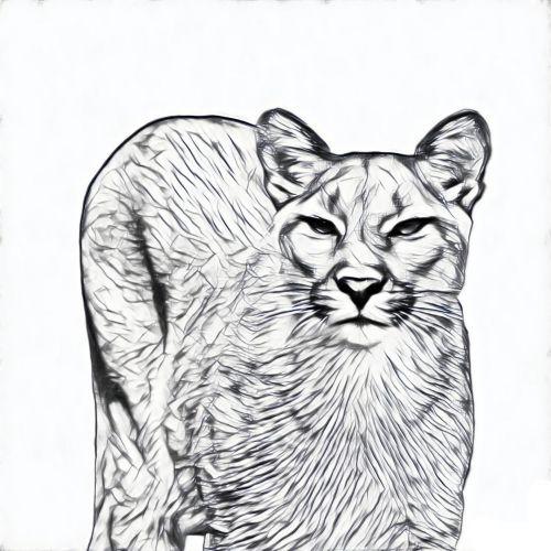Puma, puma, juoda, eskizas, balta, fonas, piešimas, laukiniai, gyvūnas, Puma eskizas