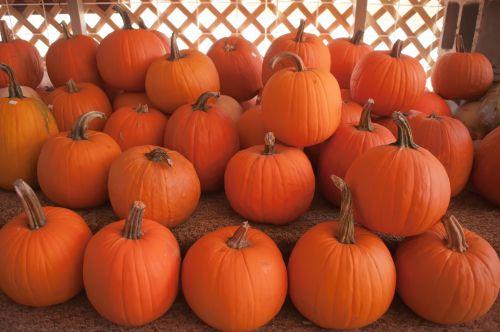 Žemdirbystė, ruduo, fonas, iškirpti, apdaila, kritimas, šventinis, moliūgai, Halloween, derlius, Moliūgas žibintas, Spalio mėn, oranžinė, pleistras, moliūgas, moliūgas & nbsp, pleistras, apvalus, sezoninis, skvošas, apgauti & nbsp, ar & nbsp, gydyti, daržovių, daržovės, moliūgai moliūgo pleistras