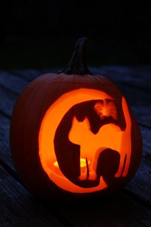 moliūgas,Halloween,ruduo,oranžinė,daržovės,išskaptuoti,Spalio 31 d .,dangtelis,drožyba moliūgų,iškirpti moliūgo vaiduoklis,Halloweenkuerbis,moliūgų vaiduoklis,rudens apdaila,Diy moliūgų vaiduoklis,iškirpti,Spalio mėn,Moliūgas žibintas,tuščia,interjeras,vaikas,pokštas arba saldainis,veidas,moliūgų veidas,žibintas,įrašyti,fash,vaikai,katė,voras,ragana,mėnulis,šviesa,tamsi,tamsa