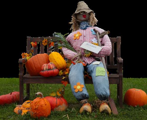 moliūgas,šiaudų moteris,lėlės,deko,šiaudai,ruduo,sodo apdaila,Šiaudinis zmogus,dekoratyviniai skvošaičiai,moliūgas,rudens apdaila,spalvinga,apdaila,muitinės,rudens pradžia,padėka,bankas,metų laikas,moliūgai,rudens motyvas,Halloweenkuerbis,oranžinė,skrybėlę,juokinga,izoliuotas
