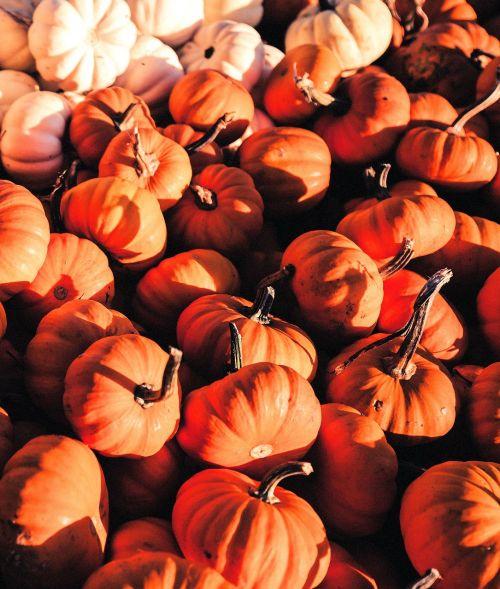 moliūgas,moliūgai,oranžinė,balta,Halloween,ruduo,apdaila,daržovės,sezonas,turgus,alimentari,virtuvė,šviežios daržovės,Produktai,sodininkystė