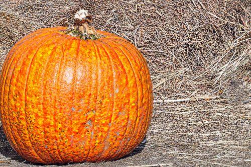 moliūgas, moliūgai, šienas, pine & nbsp, šienas, kritimas, derlius, Halloween, padėka, moliūgai ir šienas