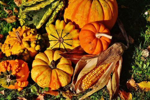 moliūgai,dekoratyviniai skvošaičiai,gamta,ruduo,apdaila,spalvinga,daržovės,rudens daržovės,padėka,derlius
