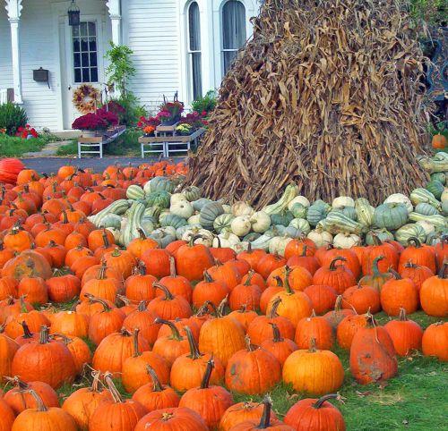 moliūgai, moliūgai, kukurūzai, stiebai, foddershock, ruduo, kritimas, Halloween, gėlės, namas, moliūgai ir moliūgai