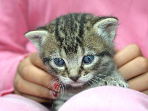 šuniukas,kačiukas,atrodo,naminis gyvūnėlis,švelnumas,naminis katinas,naminis katinas,katės namai