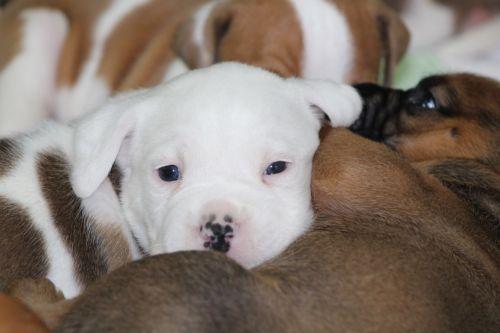 pakratai, šuniukai, šunys, gyvūnai, naminiai & nbsp, naminiai gyvūnai, šuniukas supilamas