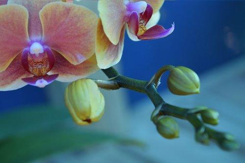 violetinė, orchidėjų, Naujas augimas, gėlė, žydi, pobūdį, rožinis, žiedas, geltona, žydi, filialas, Uždaryti, šviežumas, žydi, BUD, botanika, Žiedlapis, gėlių, pavasaris, vasara