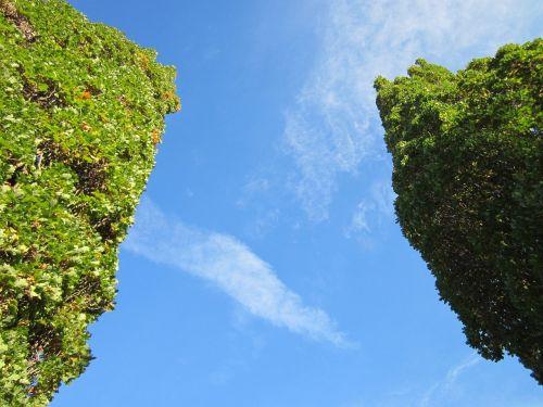 quercus robur, angliškas ąžuolas, ąžuolas, prancūziškas ąžuolas, medžiai, botanika, flora, augalas, rūšis, lapija, perspektyva