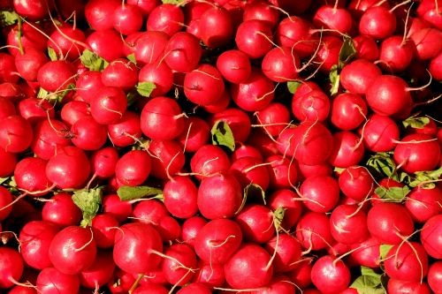 ridikai,ridikėliai,daržovės,maistas,valgyti,parduoti šviežias daržoves,radi,turgus,ūkininkų vietos rinka
