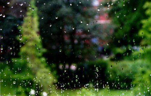 lietus,lašelinė,langas,medis