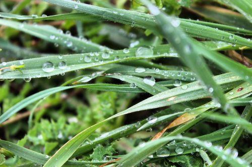 lietus,žolė,kocaeli,Turkija