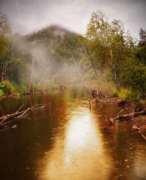 miškas, tvenkinys, vanduo, lietus, vasara, grožis, rūkas, lietus miške.