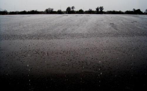 lietus, šlapias, blizgantis, tarmac, kraštas, krūmai, lietus ant šaligatvio
