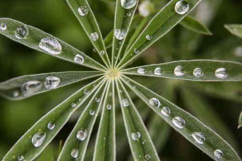 lietaus lašai, vanduo, šlapias, lietus, makro, uždaryti & nbsp, lapai, simetrija, modelis, dizainas, viešasis & nbsp, domenas, fonas, tapetai, Mamutas & nbsp, karštos & nbsp, spyruoklės, yellowstone & nbsp, nacionalinis & nbsp, parkas, Vajomingas, usa, žalias, flora, augmenija, gamta, oras, dykuma, lietaus lašai