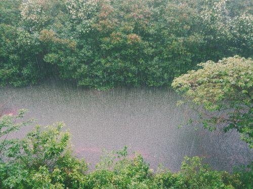 lietus, lietus, upelis, vanduo, medžiai, krūmai, krūmynai, dušas, oras, šlapias, purslų, upė, aplinka, gamta, lapija, audra, lietaus lašai, pavasaris, lietaus lietus