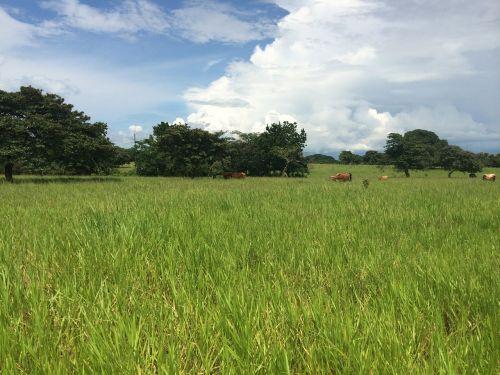 ranča,gyvuliai,arkliai