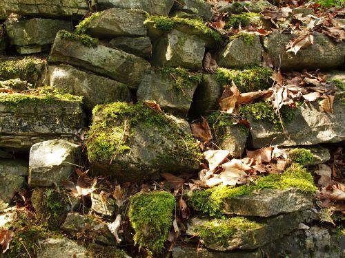 fonas, tapetai, tekstūra, lauke, blokai, gamta, natūralus, akmenys, lapai, mažėja & nbsp, lapai, atspalvis, saulės šviesa, Saunus, samanos, šešėliai, žalias, atsitiktinis & nbsp, modelis, atsitiktinis roko sienos fonas