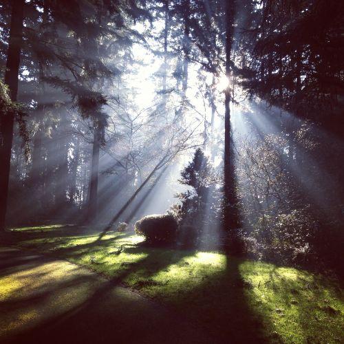 spinduliai, saulės šviesa, šviesa, saulės šviesa, miškas, šviesus, medis, saulės spindulys, vaizdingas, rytas, saulės spindulys, gamta, šešėliai, lapija, per, aplinka, mediena, augmenija
