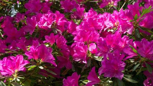 raudona, šviesus, pavasaris, gėlės ir augalai, natūralus, pobūdį, Sodas, gėlė