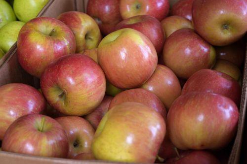 raudoni & nbsp, obuoliai, botanikos, krūva, pirkti, Iš arti, vartoti, mityba, valgymas, maistas, šviežias, šviežumas, vaisiai, vaismedžių, derliaus nuėmimas, sveikas, ingredientas, sultingas, daug, turgus, mellow, niekas, augalas, daug, parduoti raudoni obuoliai