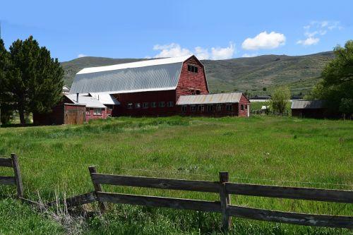 raudonasis svirnas,ūkis,Žemdirbystė,ūkininkavimas,kraštovaizdis,Šalis,kaimas,vasara,žalias