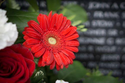 Šalis, mirtis, kovoti, gėlė, laisvė, laisvė, memorialinis & nbsp, diena, patriotinis, pasididžiavimas, raudona, Prisiminti, Vietnamas, Vietnamas & nbsp, memorialas, Vietnamas & nbsp, siena, karas, karas & nbsp, memorialas, raudona gėlė nacionaliniame memoriale