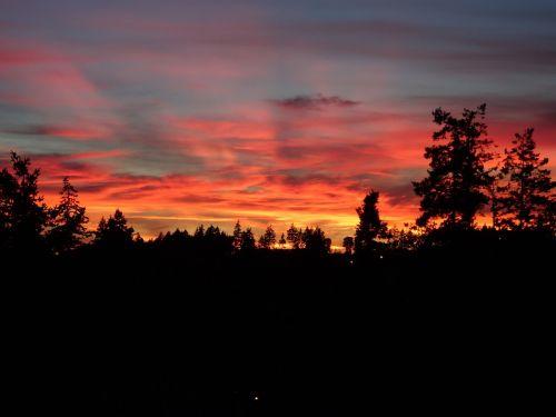 raudonas dangus,silueto medžiai,dangus,saulėlydis,vakaras,spalvingas dangus