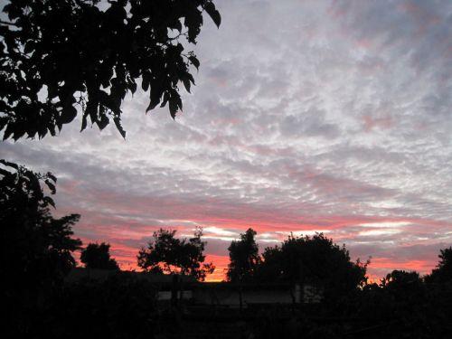 saulėlydis, debesys, flocky, plunksna, laisvas, smailas, raudona, dangus, vakaras, medžiai, raudonas tonuotas dangus