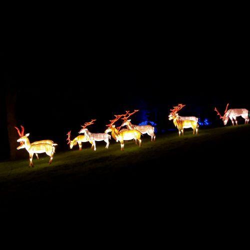 šiaurės elniai,žibintas,naktis,apdaila,šviesa,dekoratyvinis,elnias,vakaras,lauke,spindi