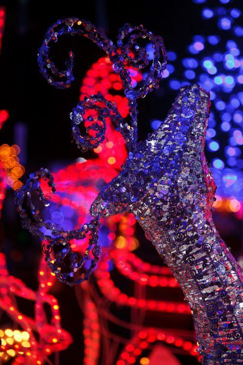 šviesus, šventė, Kalėdos, tamsi, apdaila, elnias, šventinis, šventė, apšviestas, šviesa, žibintai, naktis, naktis, šiaurės elniai, sezonas, sezoninis, blizgantis, tradicija, žiema, xmas, šiaurės elnių gėlių dekoravimas