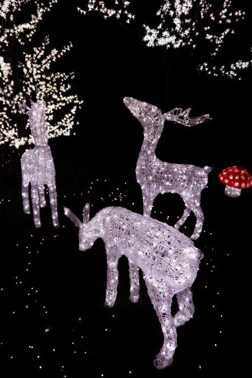 šviesus, šventė, Kalėdos, tamsi, apdaila, elnias, šventinis, šventė, apšviestas, šviesa, žibintai, naktis, naktis, šiaurės elniai, sezonas, sezoninis, blizgantis, tradicija, žiema, xmas, šiaurės elnių gėlių dekoracijos