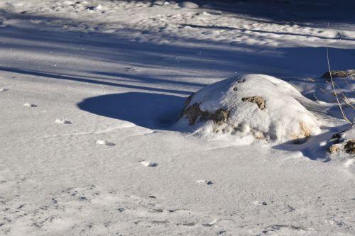 šiaurės elniai, spausdinti, vaikščioti, sniegas, spaudiniai, kirvis, šiaurės elnių nuotraukas sniege