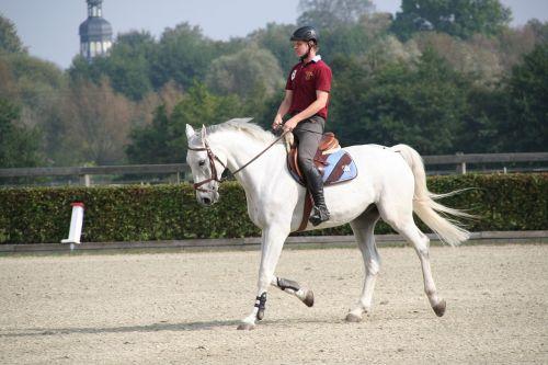 Reiter,arklys,išsiveržimas,balnas,pelėsiai,keturios horizontalios juostos