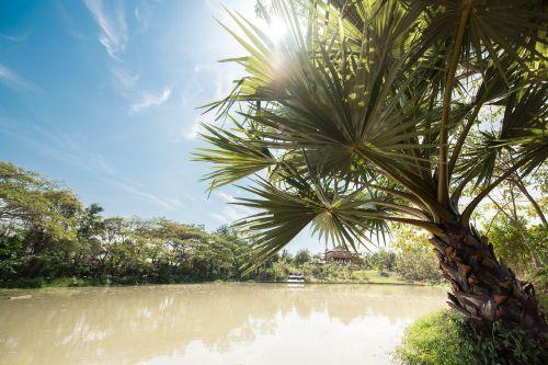 atsipalaiduoti,gamta,atsipalaiduoti,grožis,laisvalaikiu,atsipalaiduoti,kelionė,lauke,kelionė,gyvenimo būdas