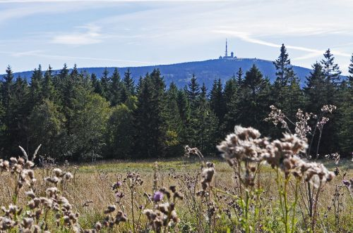 derva,brocken view,torfhaus,knoll,spygliuočių miškas,spygliuočiai,pieva,frühherbst,riedulys,žemutinė Saksonija,Saksonija-Anhaltas,oberharz,Nacionalinis parkas,laukiniai augalai,aukšta pozicija,Highlands,žygiai,pėsčiųjų takai,crest,tv bokštas,Brockeno muziejus,fiksuotas taškas