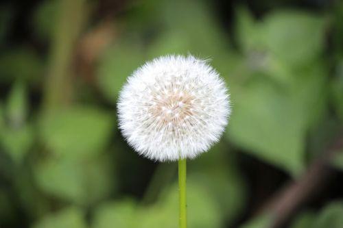 rezoliucija,išsamiai,gėlė,gamta,žiedadulkės,gėlės,laukinė gėlė