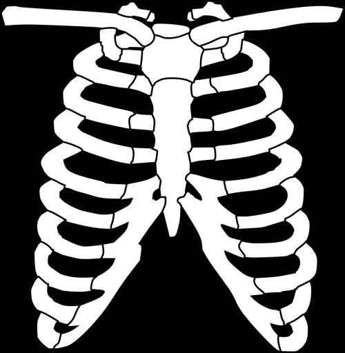krūtinės ląstos juosta,skeletas,kaulai,plaučiai,šonkauliai,biologija,mokslas,žmogus,krūtinė,sveikata,sveikata,sveikatos apsauga,rentgeno spinduliai,krūtinės angina,tyrimai,anatominis,diagrama,nemokama vektorinė grafika