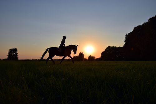 važiuoti,rait,saulėlydis,arklys,pieva,žolė