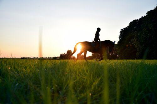 važiuoti,saulė,arklys,rait,Reiter,pieva,žolė