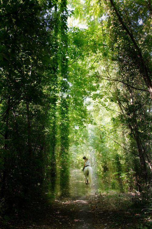raitelis,miškas,šviesa,mistikas,miško kelias,medžiai,gamta,saulės šviesa,šviesa ir šešėlis