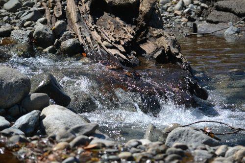 upė,vanduo,gamta,akmenys,kraštovaizdis,augmenija,dabartinis,uolos ir augmenijos,akmenys,bagažinė