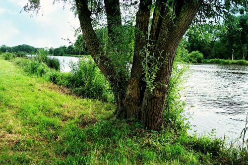 upė,upės krantas,medis,kraštovaizdis,gamta,augmenija,Krantas
